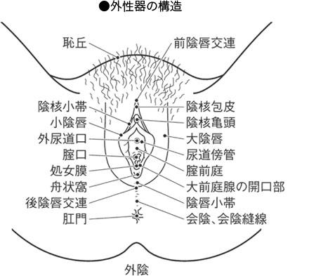女性器の構造を図にしています。