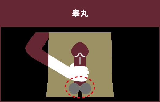 【フェラするために押さえておきたい3つの部位】③睾丸
