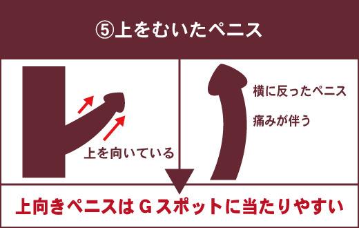 【女性が理想とするペニスの特徴⑤】上を向いたペニス ▶上向きペニスはGスポットに当たりやすい ※ペニスが横にそっていると女性が痛がることもある