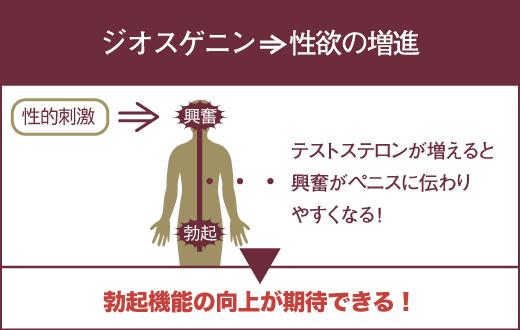ジオスゲニンを摂取すると、性欲が高まり勃起機能の向上が期待できる。