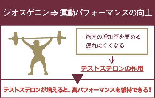 ジオスゲニンを摂取すると、運動パーフォーマンスの向上が期待できる。
