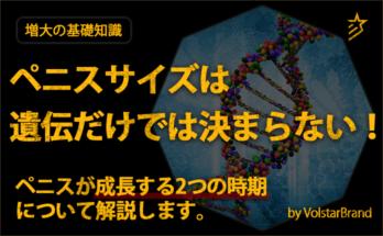 ペニスサイズは遺伝だけでは決まらない!ペニスが成長する2つの時期について解説します。